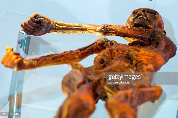 """May 2020, Saxony-Anhalt, Magdeburg: A replica of the Stone Age man """"Ötzi"""", who was discovered in the Ötztal Alps in 1991, can be found in the Museum..."""