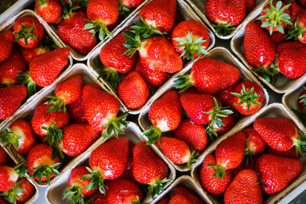 DEU: Hessian Strawberry Season Kick Off