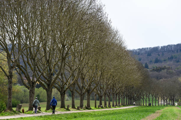 DEU: On The Occasion Of The 100th Birthday Of Joseph Beuys - 7000 Oaks In Kassel