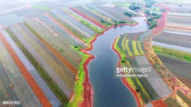 ZHANJIANG May 25 2017 Aerial photo taken on May 24 2017 shows farmland in a colorful garden at Xuwen County in Zhanjiang south China's Guangdong...