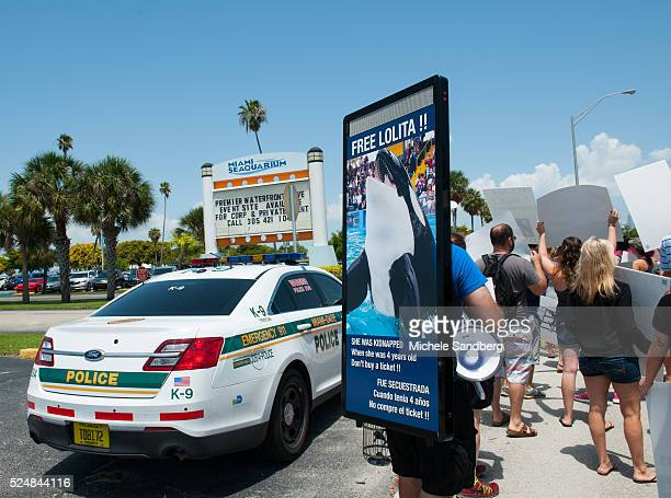 May 9 Protestors line up outside the Seaquarium in the hot afternoon sun supporting Lolita the Whale who lives at the Seaquarium. The size of...