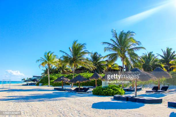 mayakoba beach, yucatan, mexico - quintana roo stock pictures, royalty-free photos & images