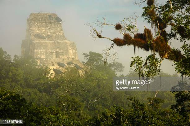 mayan temples rising from the surrounding rain forest canopy, tikal, guatemala - guatemala stock pictures, royalty-free photos & images