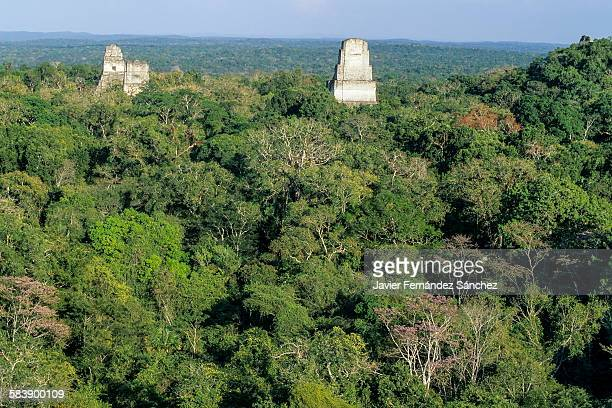 Mayan temples surrounded by rainforest