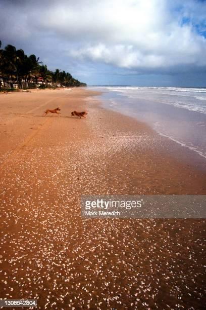 mayaro beach - trinidad and tobago stock pictures, royalty-free photos & images