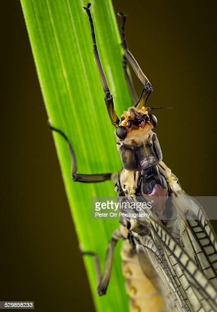 mayfly dun - mayfly stock pictures, royalty-free photos & images
