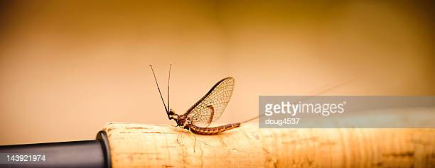 mayfly on fising rod handle - fly casting stock pictures, royalty-free photos & images
