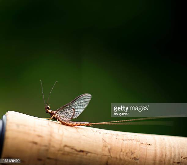 mayfly on fising rod handle - mayfly stock pictures, royalty-free photos & images