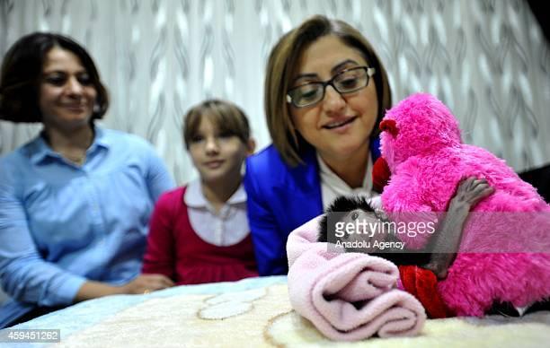 Mayor of Gaziantep Fatma Sahin take cares a newborn baboon as it cuddles a plush monkey that presented by Sahin in Gaziantep southeastern city of...