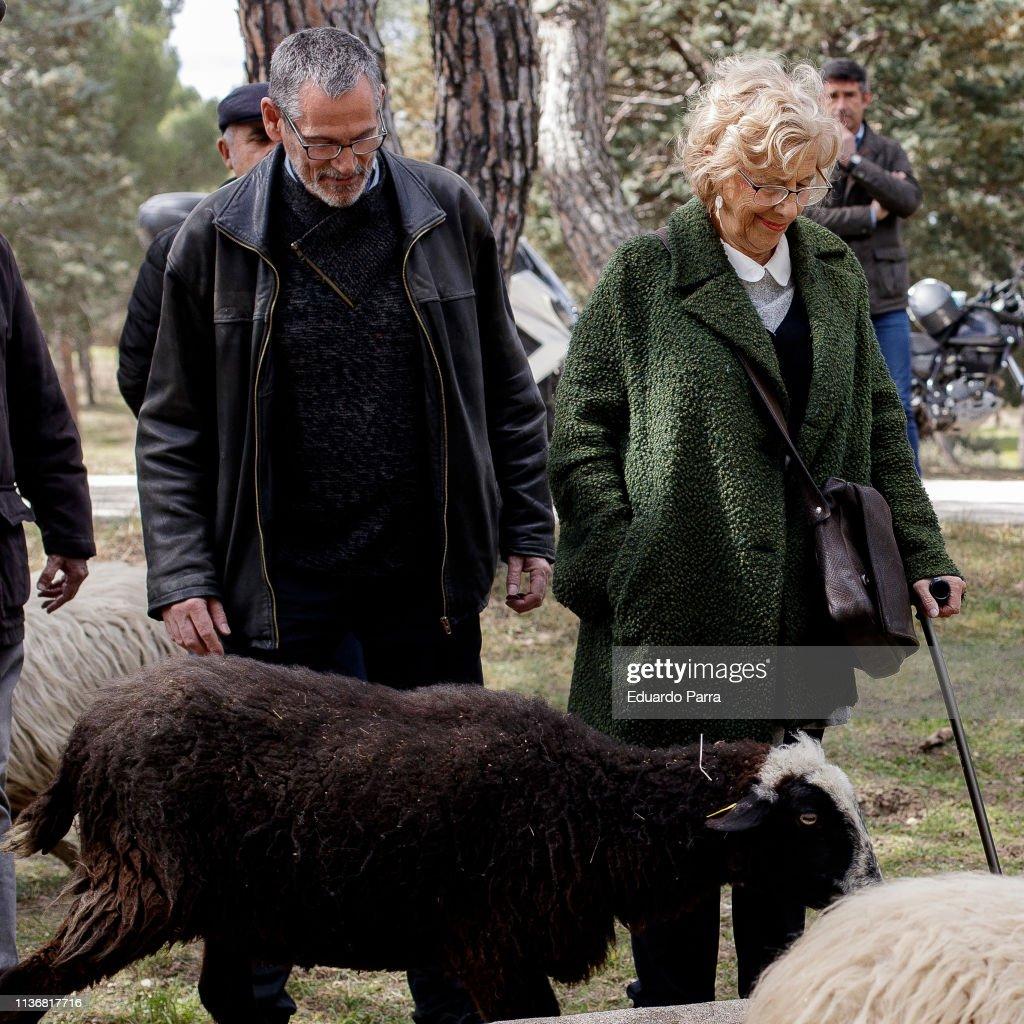 ESP: Major of Madrid, Manuel Carmena, Visits A Flock Of Sheep In Casa De Campo
