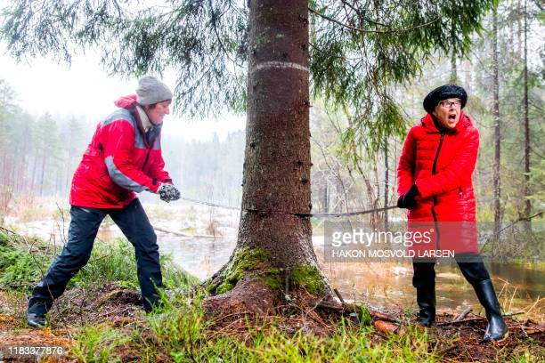 Mayor of Oslo Marianne Borgen and Ruth Bush Councillor of London's Westminster district are sawing down the tree which will stand at Trafalgar Square...