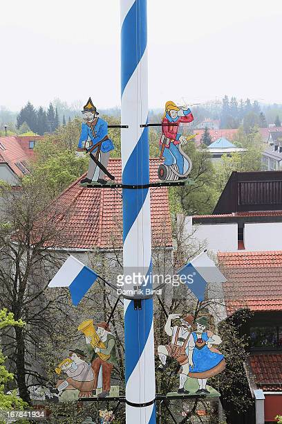 A maypole is raised as part of May Day celebrations in Ismaning on May 1 2013 in Munich Germany The tradition of erecting the tall wooden pole in the...