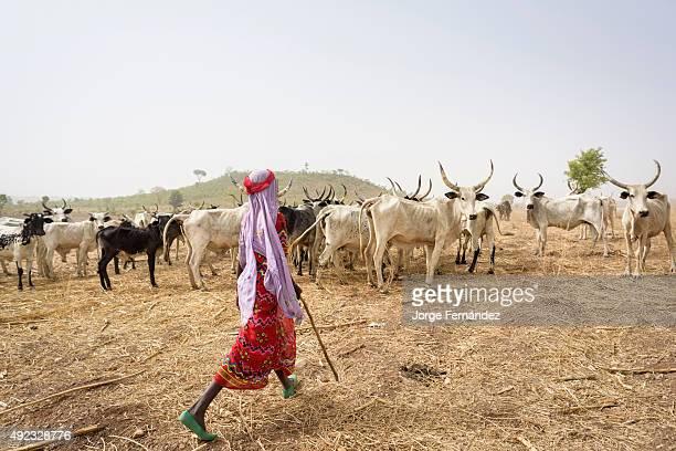 Mbororo girl shepherding her cattle