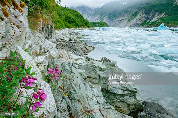 McBride Inlet, Glacier Bay National Park