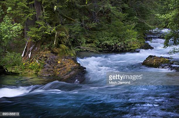 McKenzie River, Willamette National Forest, Oregon