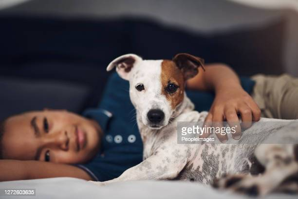 me and my human, we're best buds - jack russell terrier stock pictures, royalty-free photos & images