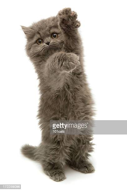 me please - persian stock photos and pictures