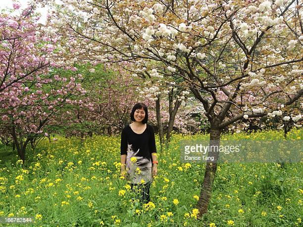 me under the cherry blossom trees - wuhan stock photos and pictures