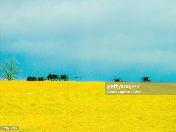 meadow against blue sky - battlefield stock pictures, royalty-free photos & images