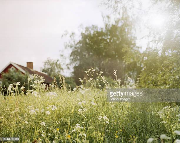 Meadow and a house