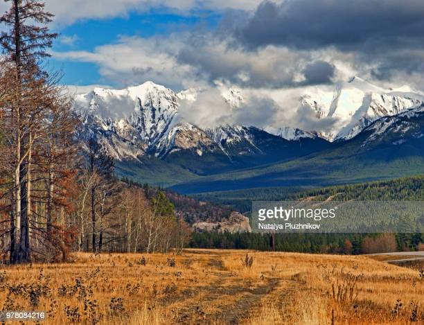 Meadow and forest under Canadian Rockies in autumn, Alberta, Canada