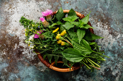 Meadow and Medicinal herbs for biohacking paleo diet 970417026