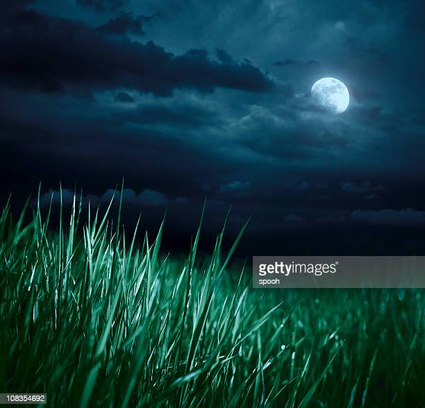 Meadow at night