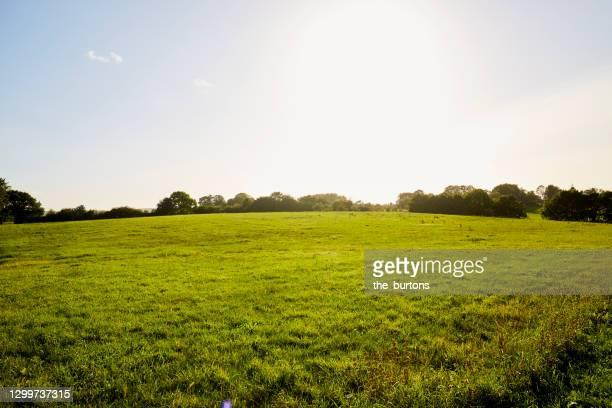 meadow, blue sky and sunlight in summer - wiese stock-fotos und bilder