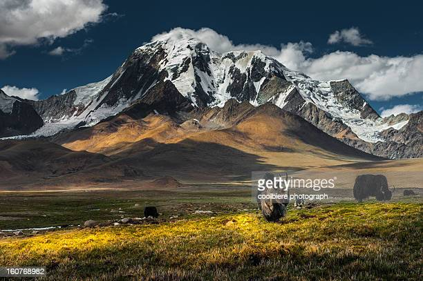 Meadow field with snow mountain background