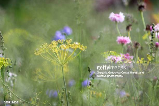 meadow flowers - gregoria gregoriou crowe fine art and creative photography. stock pictures, royalty-free photos & images