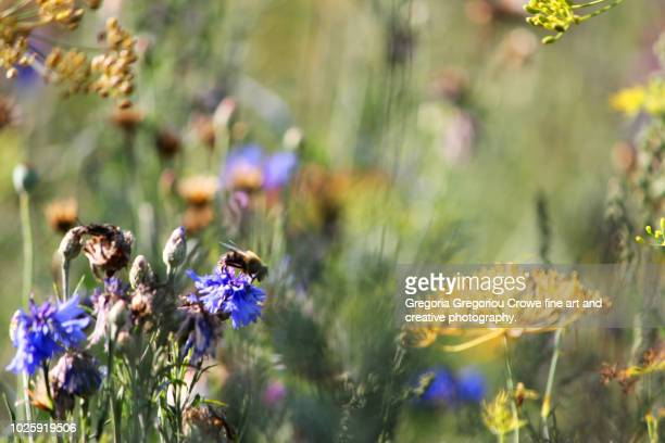 meadow flowers - gregoria gregoriou crowe fine art and creative photography stock photos and pictures