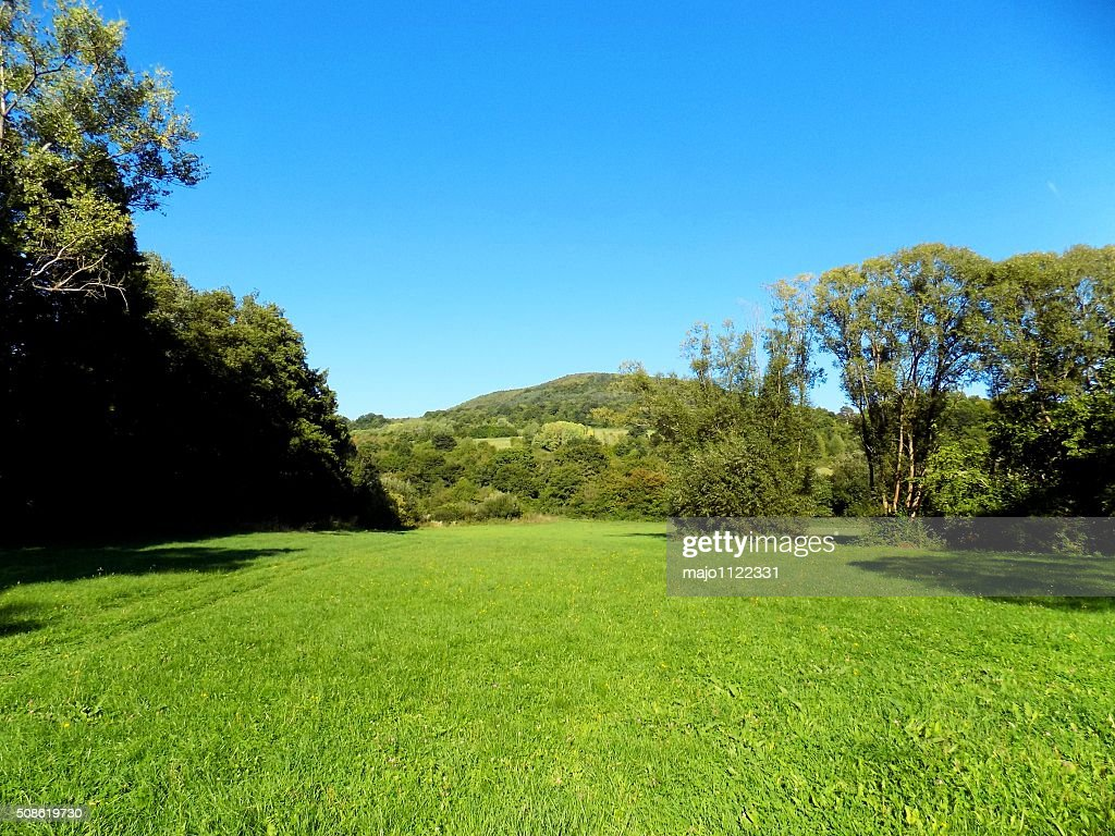 Meadow, forest and sky : Stock Photo