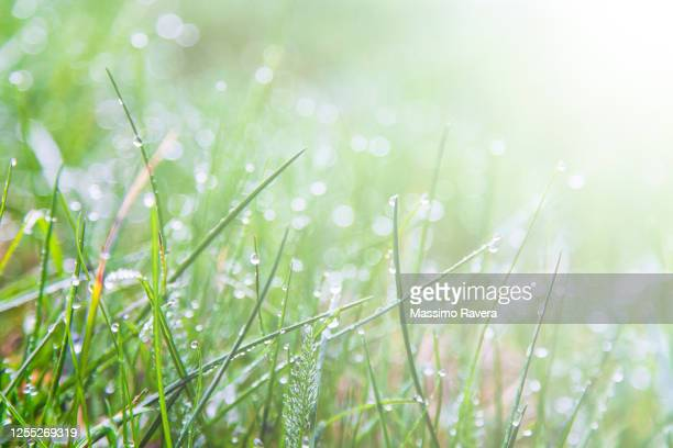 meadow full of dew covered wild flowers - 露 ストックフォトと画像