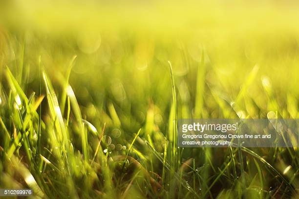 meadow grass - gregoria gregoriou crowe fine art and creative photography stock pictures, royalty-free photos & images