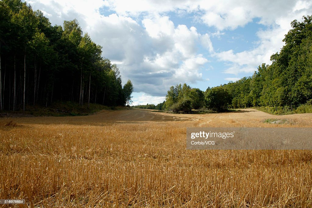 A meadow in a rural setting : Stock Photo