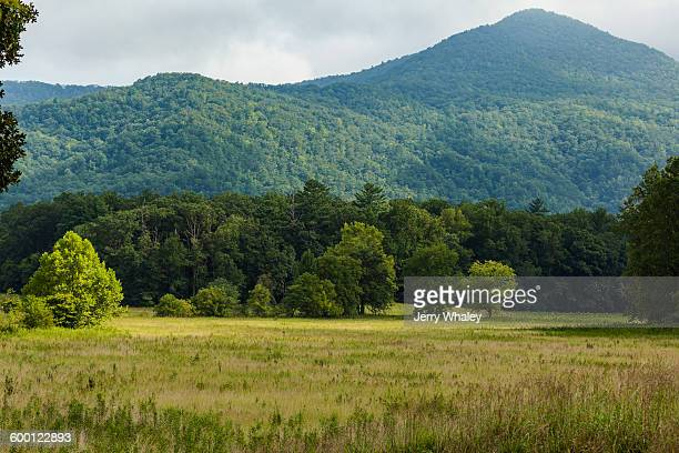 meadow in cades cove, great smoky mountains - cades cove stock pictures, royalty-free photos & images