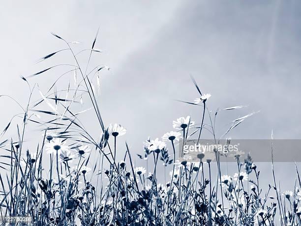 Meadow in duotone