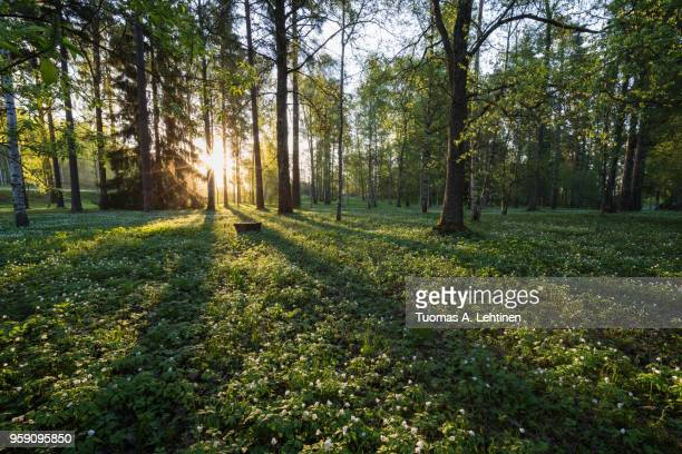 meadow in finland in summer - tampere finland stock pictures, royalty-free photos & images
