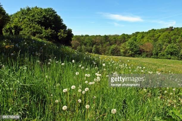Meadow in springtime