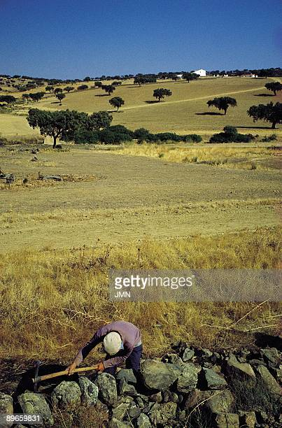Meadow landscape Feria Badajoz A peasant working next to a stone wall in a typical meadow landscape To the bottom the silhouette of a white farm