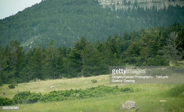 a meadow of deer - casper mountain - casper wyoming stock pictures, royalty-free photos & images