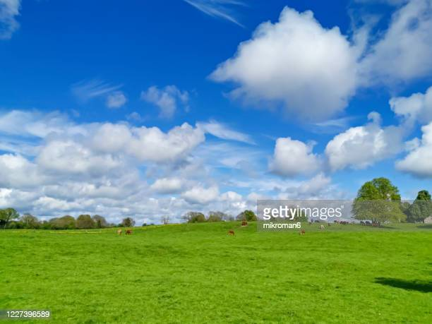 meadow on sunny spring day, ireland. - landscape scenery stock pictures, royalty-free photos & images