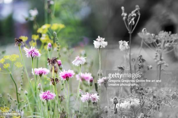 meadow - gregoria gregoriou crowe fine art and creative photography. foto e immagini stock