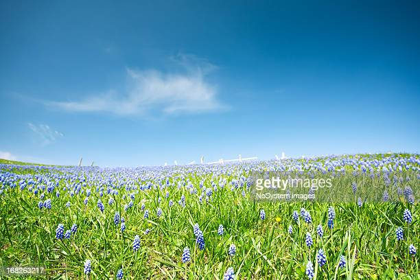 meadow - grass area stock pictures, royalty-free photos & images