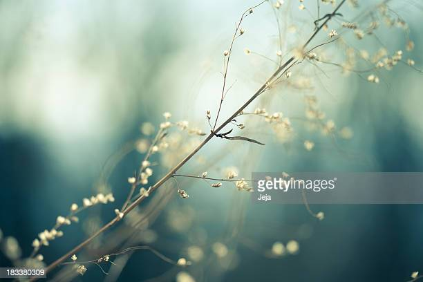 meadow - gras stock pictures, royalty-free photos & images