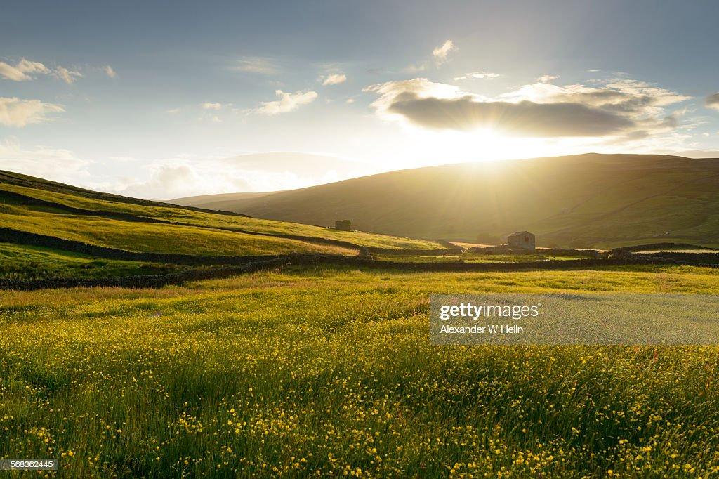 Meadow : Foto de stock
