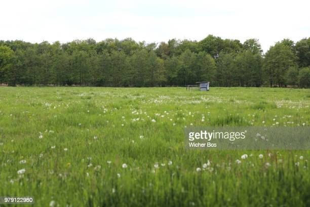 meadow - bos stock pictures, royalty-free photos & images