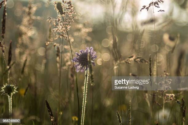 meadow - susanne ludwig stock pictures, royalty-free photos & images