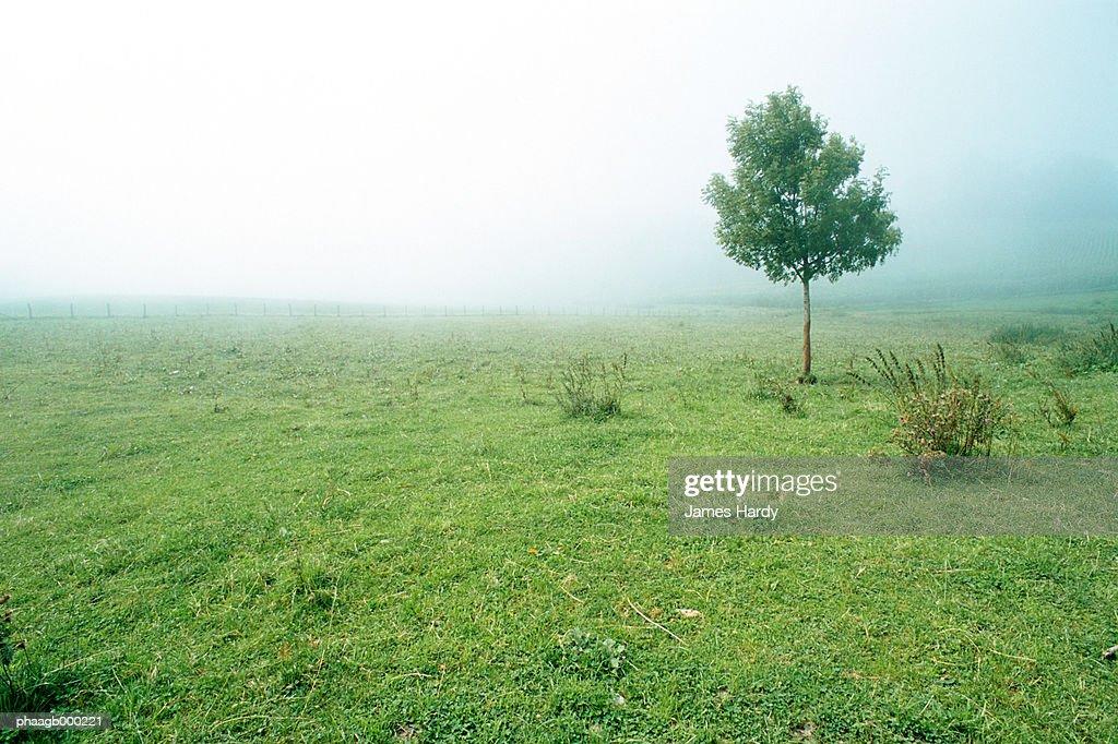 Meadow : Stockfoto