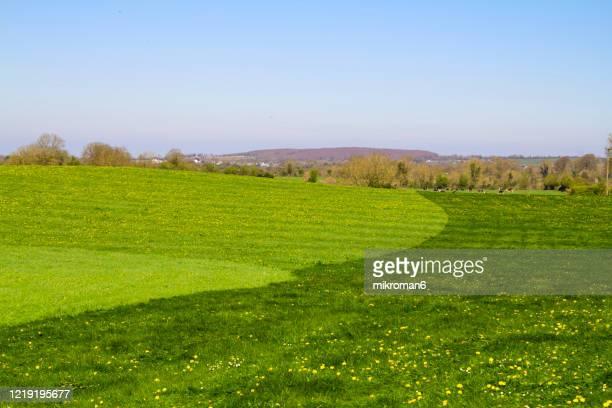 meadow roller, agriculture tool. - feuille de pissenlit photos et images de collection